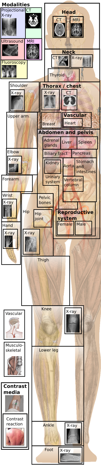Anatomy image for main menu.png